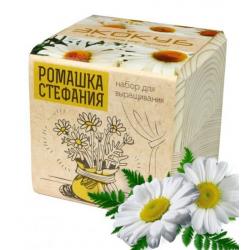"""Экокуб """"Ромашка"""" (сувенирный семенной материал)"""