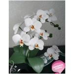 Мастер класс по изготовлению орхидеи фаленопсис из фоамирана